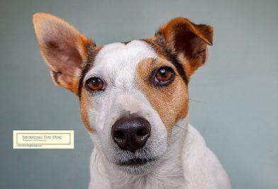 Sir Fidget Smelly-Bottom - Shooting The Dog studio dog