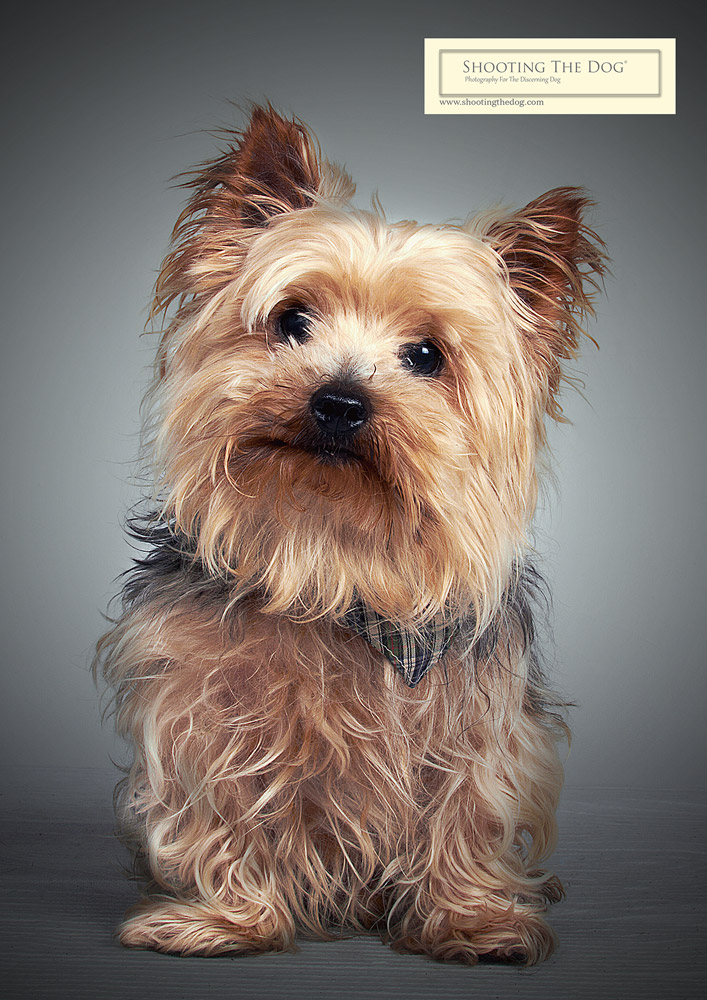 Pet Portrait - What Happens