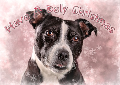 Dolly Christmas Card