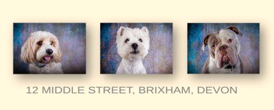 Professional Dog Photography Brixham Devon