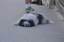 This pooch won me over when he decided it was time for a nap right in the middle of the Venice Pier.