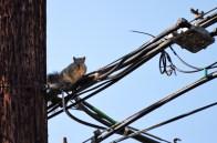 Squirrel-DSC_6284