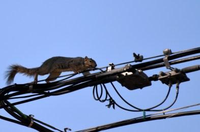 Squirrel-DSC_6307