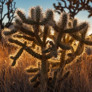 Joshua Tree: Jumbo Rocks and Prickly Plants
