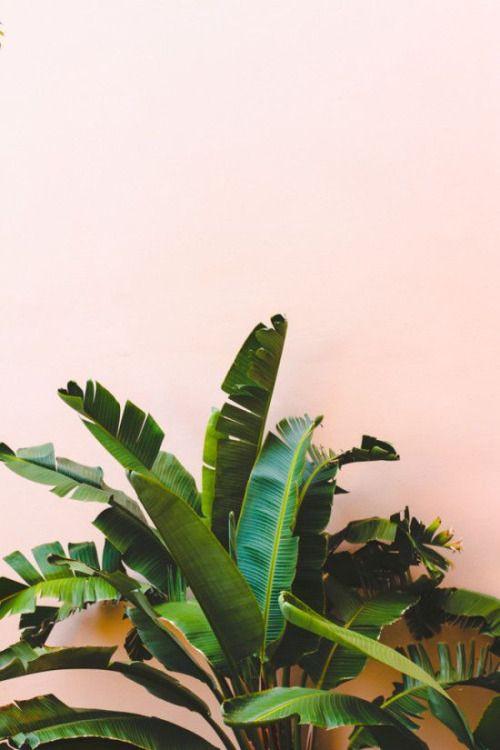 1plant pic