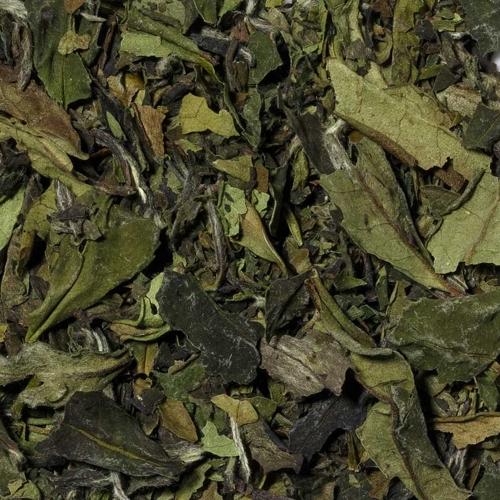 weißer Tee Pai Mu Tan aus China