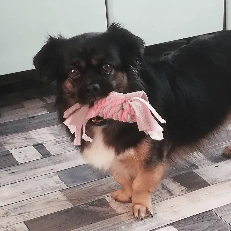Little Rascals Fleece Seilspielzeug von Happy Pet mit Hund