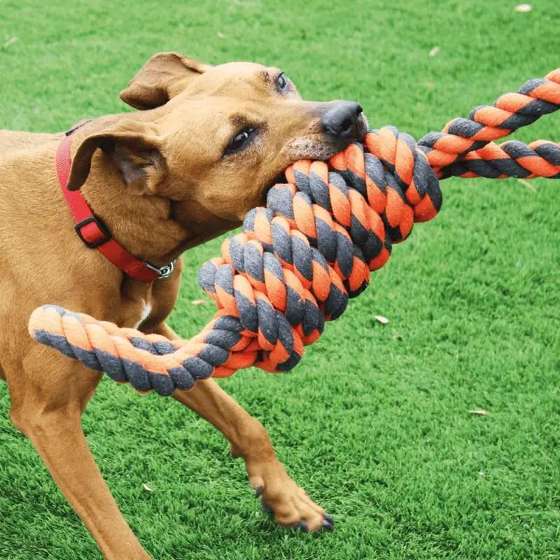Nuts for Knots Extreme Acht von Happy Pet mit Hund
