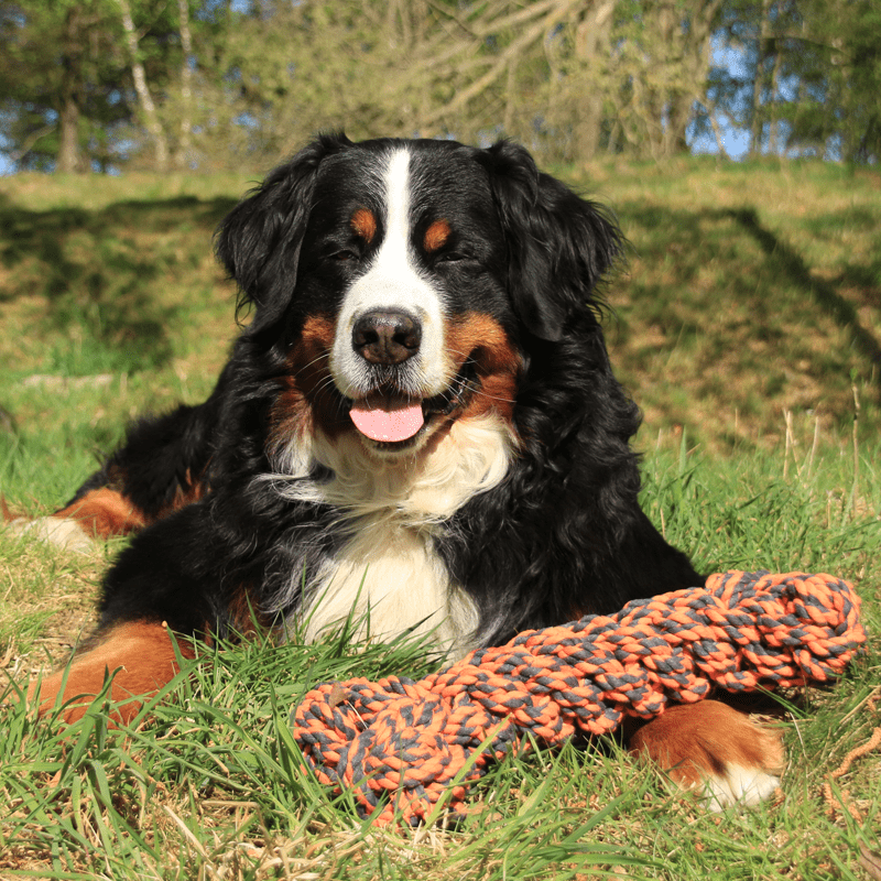 Nuts for Knots Extreme Knochen von Happy Pet mit Hund