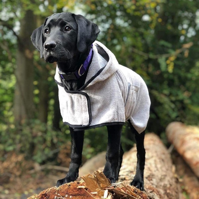 Groom Bademantel für Hunde von Happy Pet getragen von einem schwarzen Hund auf Baumstamm im Wald stehend