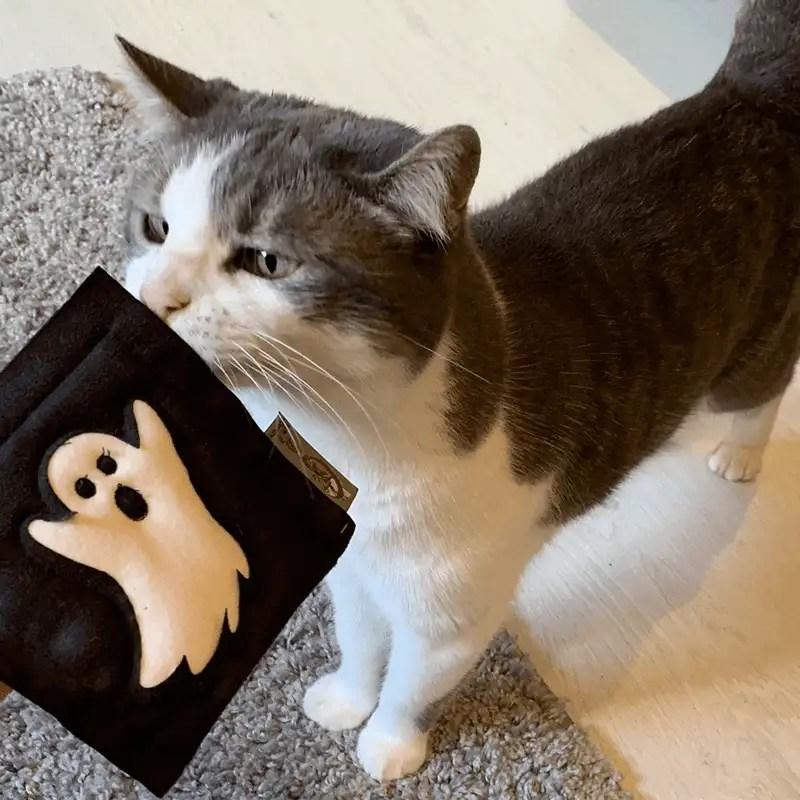 Halloween Motivkissen von 4cats schnüffelnder Katze
