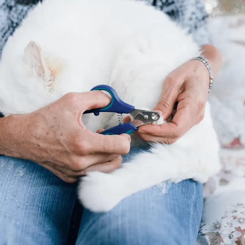 Sicherste Krallenschere für Zuhause ZenClipper von PerAnimal in den Größen XXS bis XXL in Gebrauch an Hundepfote von weißem Hund