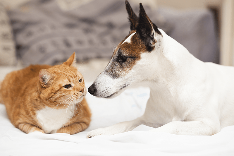 The cat and dog sniff each other cautiously