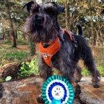 Dog Parkour Titles Assessment
