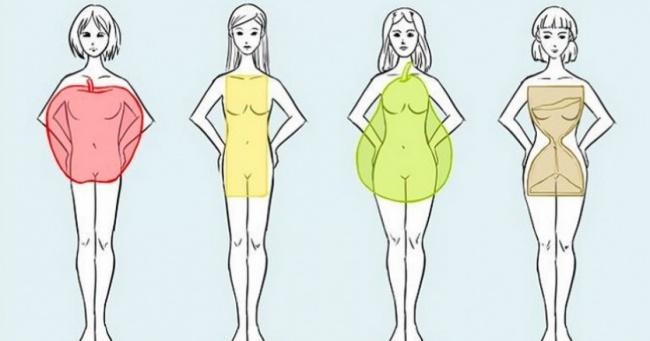 Afbeeldingsresultaat voor lichaamsvorm