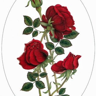 Red Roses A4 (Medium) embroidery panel, ready to embroider