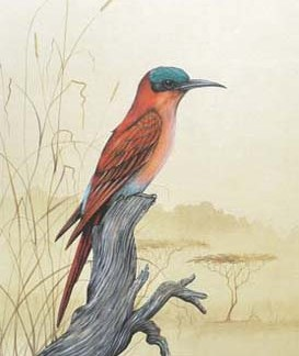 Carmine Bee-Eater A3 (Large) embroidery panel