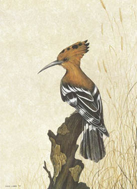 Hoopoe A3 (Large) embroidery panel, ready to embroider