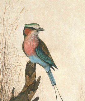Lilac-Breasted Roller A3 (Large) embroidery panel