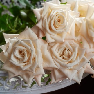Close-up photo of Champagner rose flowers sitting on metal bench. Photographed by Excitations online to promote sales of Baare Rooted roses Victoria, Australia