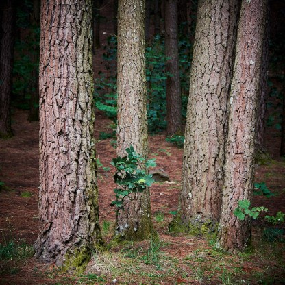 Tree trunks in a forest, close photo lots of bark texture. Beginners photography course.