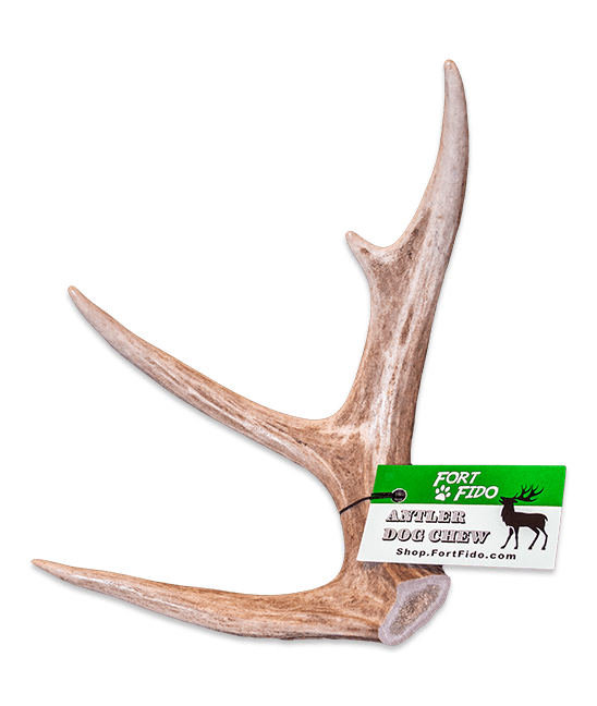 Large Branched Antler Dog Chew