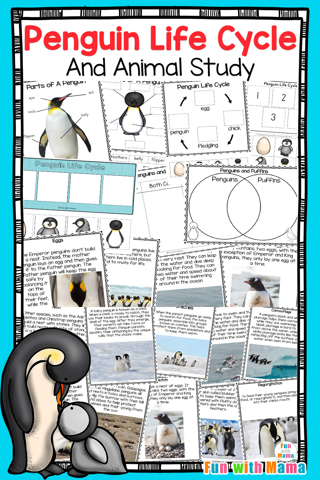 Penguin Life Cycle Penguin Animal Study