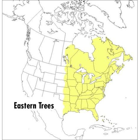 A Field Guide to Eastern Trees: Eastern United States and Canada, Including the Midwest Paperback