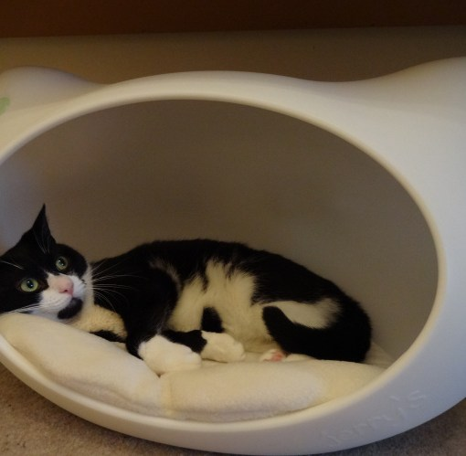 Jerry's cat cave