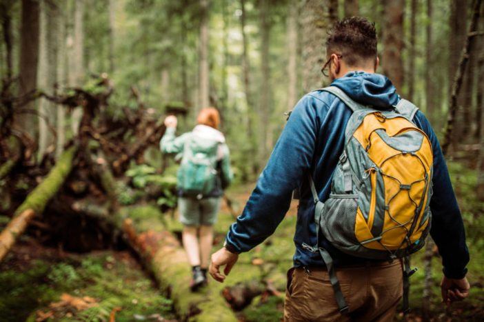 Group of hikers walking in the forest