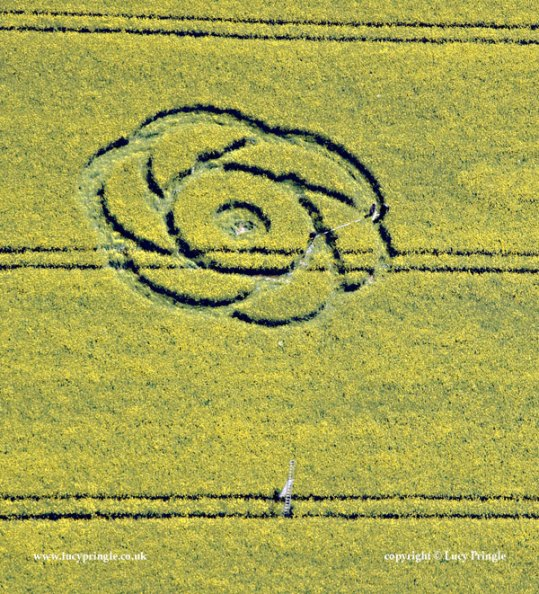 Alton Priors, Wiltshire - 1st May 2015 Man-made and commissioned for Ancient Aliens programme produced by Prometheus. Rose type circle. Oilseed Rape (Canola) 90ft (27.7 m) in diameter