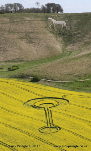 Cherhill, Nr Beckhampton, Wiltshire. 16 April 2017. Oil seed rape (canola). c.180 (55m) long. Larger circle. c.100 feet (30.5m) diameter. Smaller circle c.40 feet (12m) diameter. A long bar with circles either end. The larger one containing a crescent.