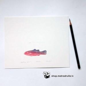Miniatūra Ziemeļu zivs