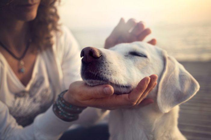 owner gently caressing her dog at Pick a Pooch Omaha, NE
