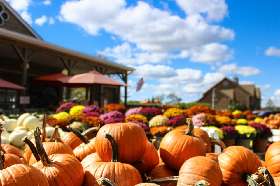 Pumpkin Patch at Halloween Time