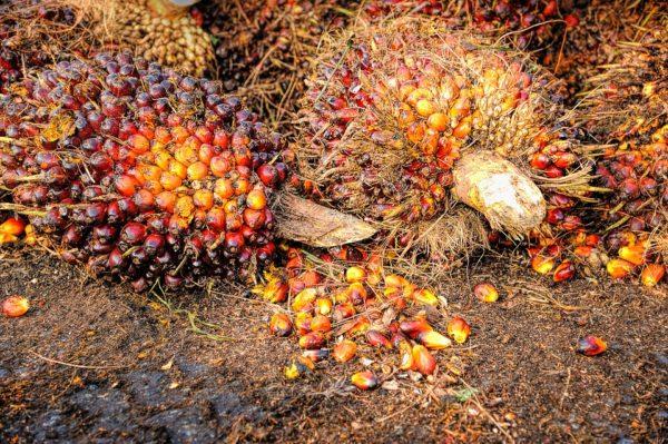 Thema Palmöl
