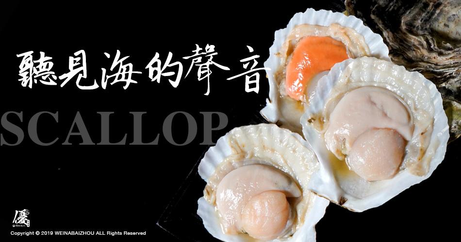 巨大鮮甜扇貝*四顆(500g/份)【水產優】