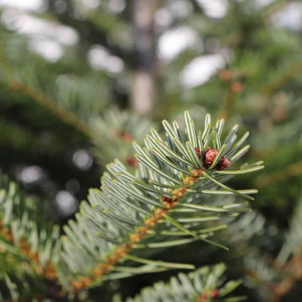 Weihnachten im Winter