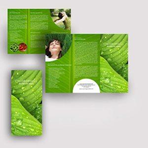 Chlorophyll-Wunder-der-Natur