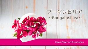 bougainvillea-youtube