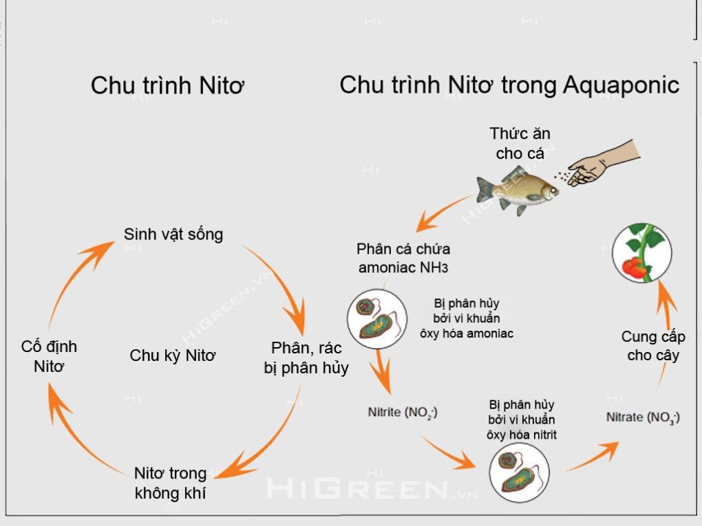 Chương 2: Kiến thức về Aquaponics Chu trình Nitơ