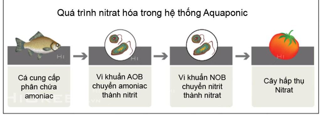 Chương 2: Kiến thức về Aquaponics Qúa trình nitrat hóa trong hệ thống Aquaponics