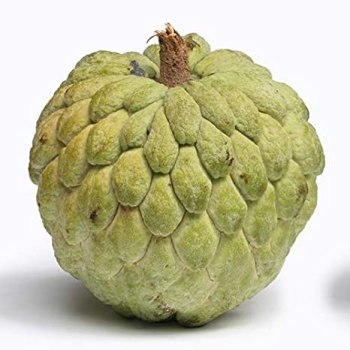 Fruits Custard Apple