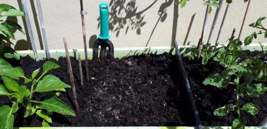 Étape 4 germination des graines de poivre avec ShopCanarias.es