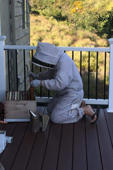 Opening the Hive Box