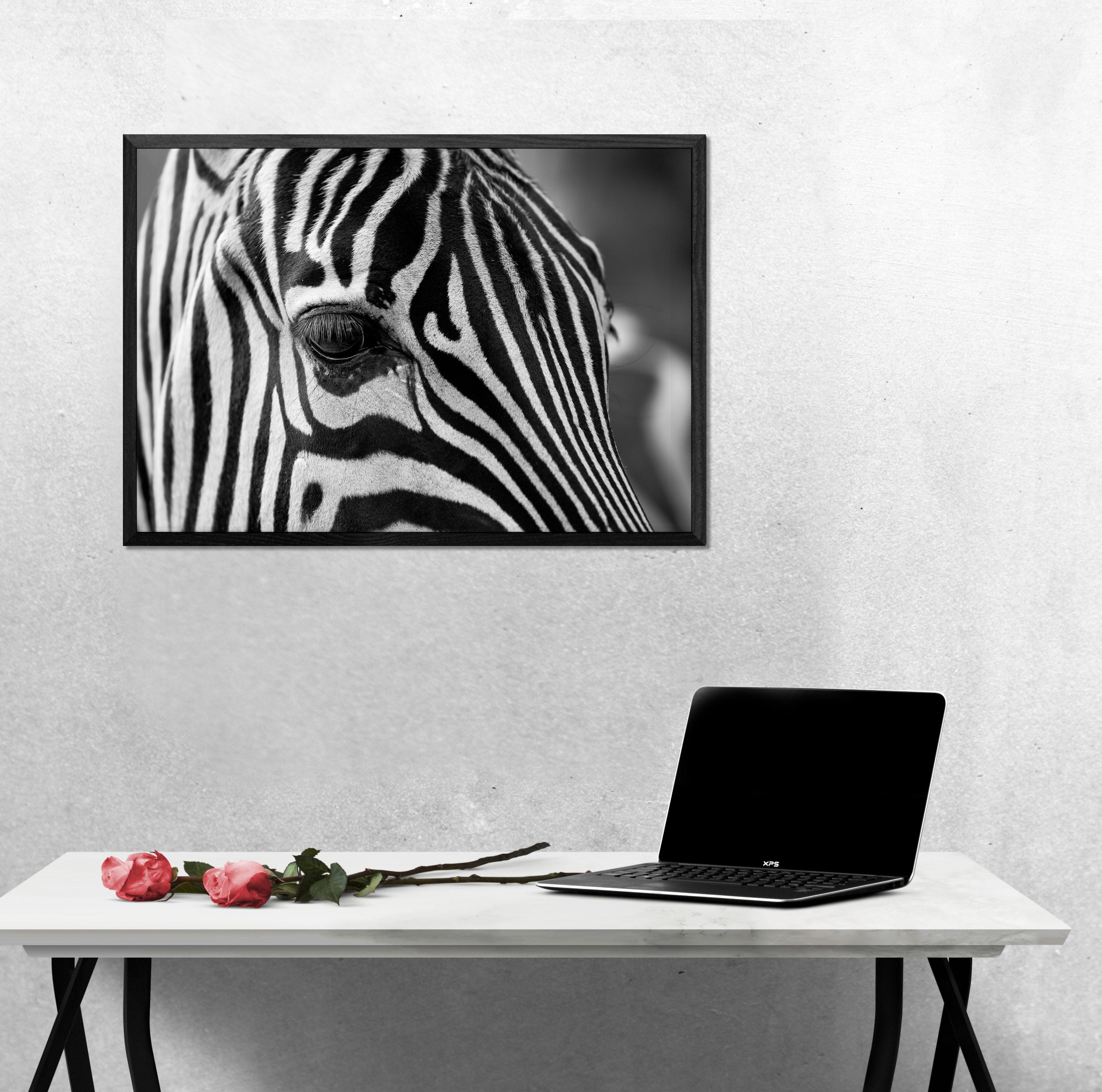 Zebra Narbild Svartvit Poster