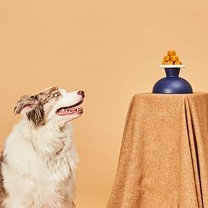 Pumpkin & PB Dog Treats