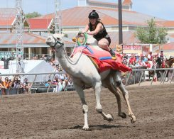 CBY Camels Extreme Day 7-16-16 005