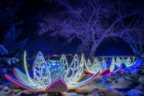 Winter Lights 2018_Jason_Boudreau-Landis-9461