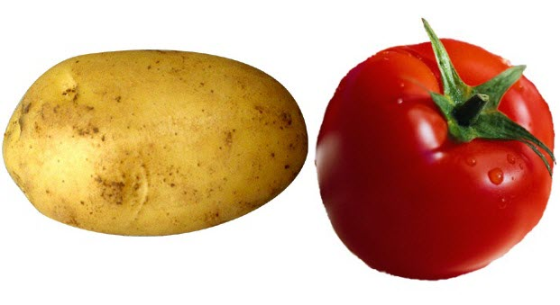 Trị nám da tận gốc bằng cà chua và khoai tây